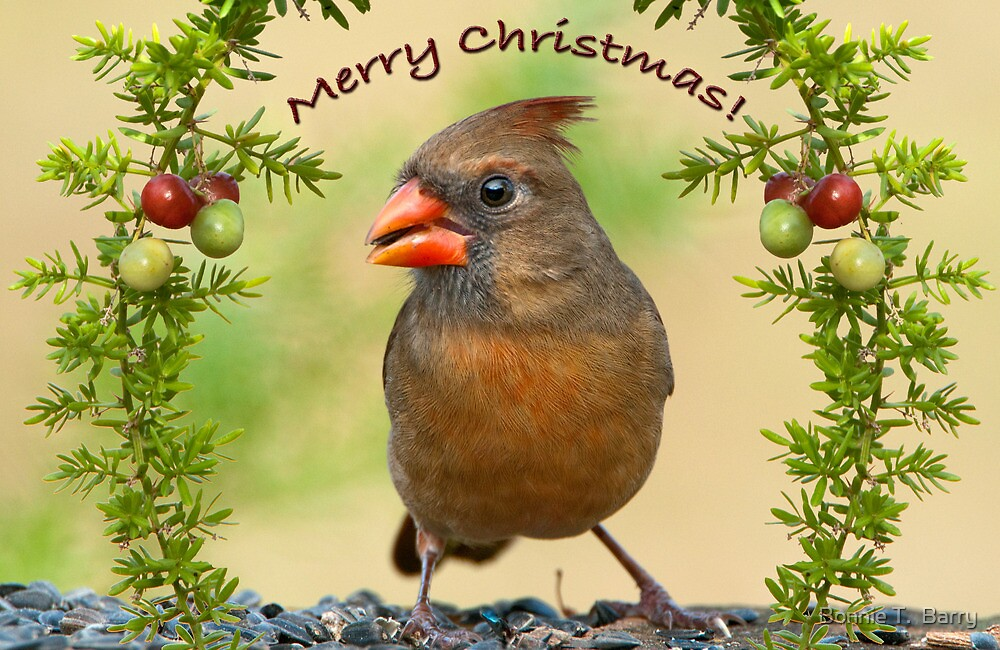 Christmas Greetings from Mrs. Cardinal by Bonnie T.  Barry