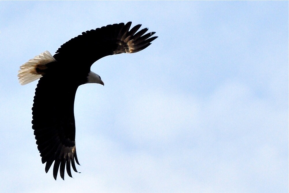 Soaring Eagle by Octoman