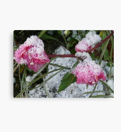 TINY FLOWERS SHROUDED IN SNOW Canvas Print