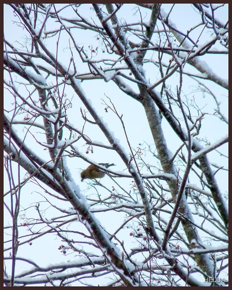 Bird Feeding on Rowanberries by HELUA