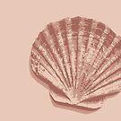 Peach Seashell by Samm Poirier
