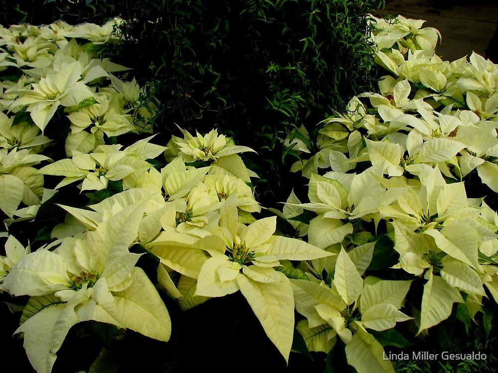 Seasonal Beautiful by Linda Miller Gesualdo