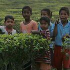 Tea plantation, Assam, India by Denzil
