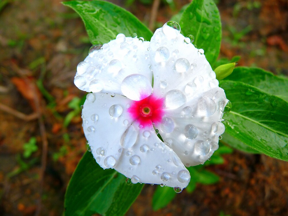 Flower covered in rain drops by atoth