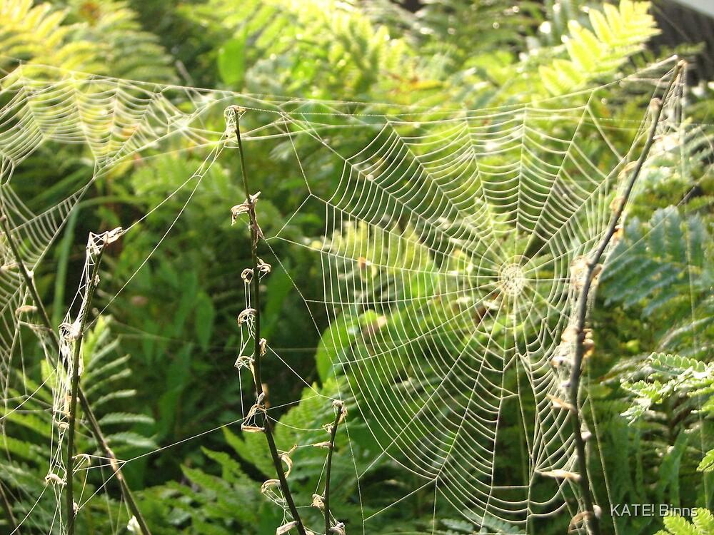 Spiderweb and Ferns. by KATE! Binns