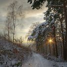 Pirn pines by Ranald