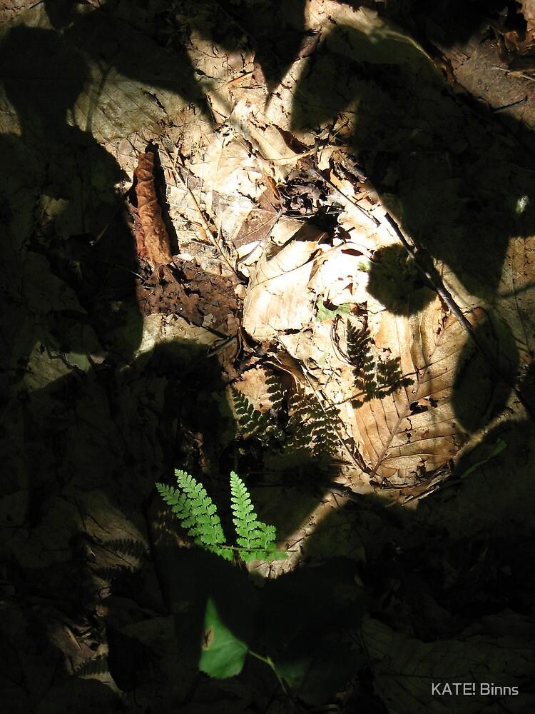 Ferns, Shadows, and Light by KATE! Binns