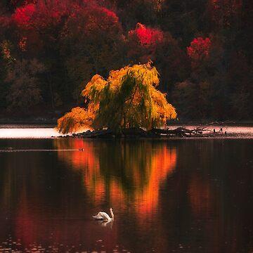 Jamaica Pond, Boston by mattmacpherson