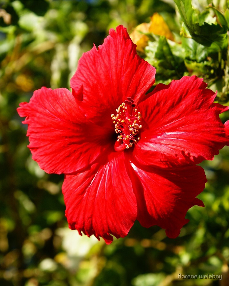 Really Red by florene welebny