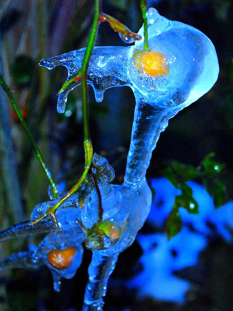 Ice around a plant at -5 by stephen denton