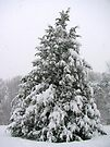 Oh Christmas Tree by Ginny York