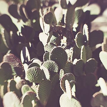 Desert Cactus by CaliforniaPhoto