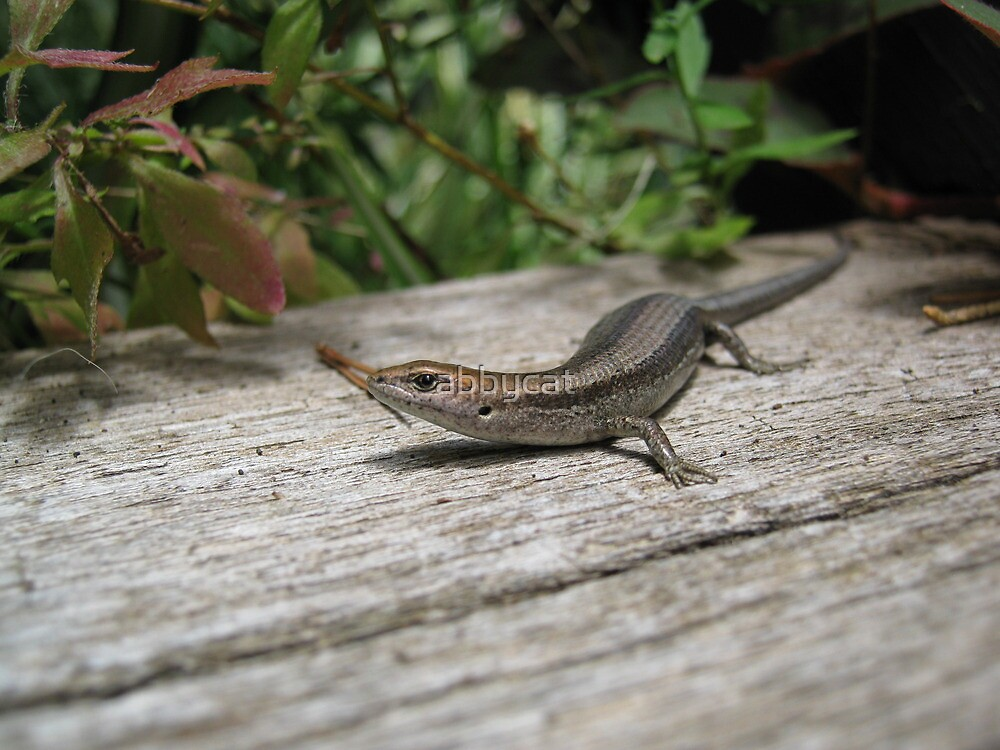 The tubby Skink by abbycat