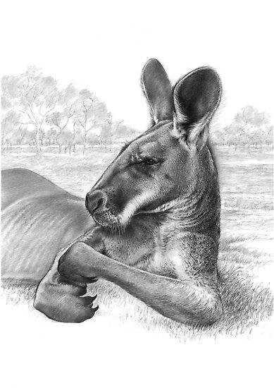 King Of The Plains - Kangaroo by Lyell Dolan