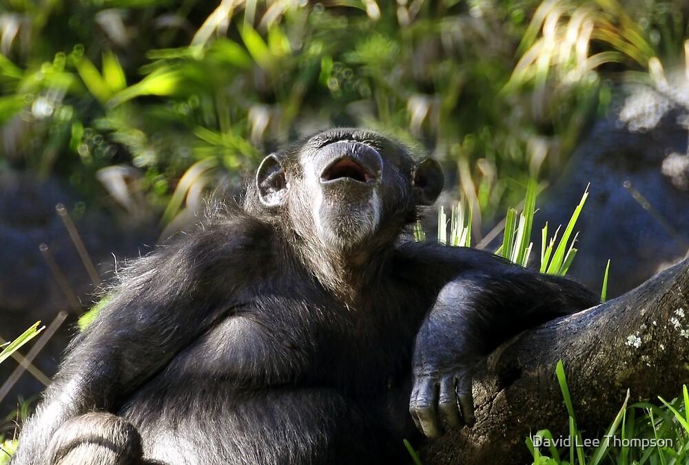 Howling Chimpanzee by David Lee Thompson