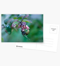 Insect on plant Postcards