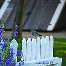 Bird atop a fence by DebbiesDigitals