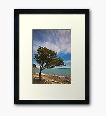 Maori Christmas Tree Framed Print