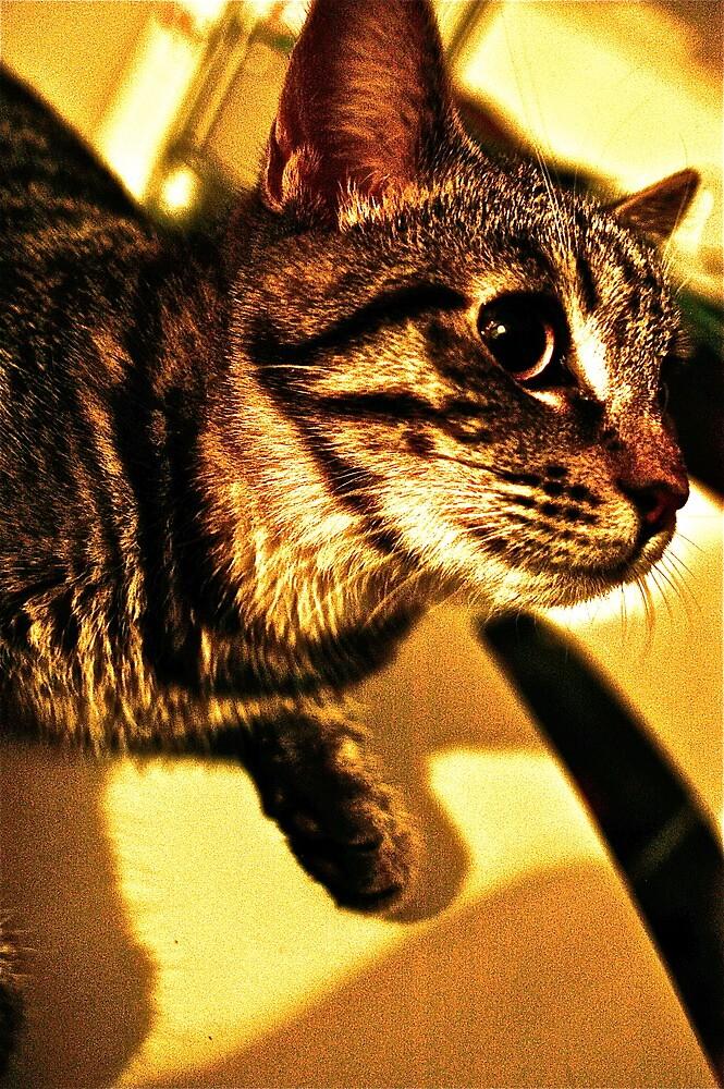 Archie the Cat by Paula Dixon