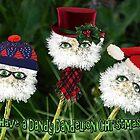 Dandelion Christmas by CarolM