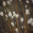 Blowing in the Wind by Vicki Pelham