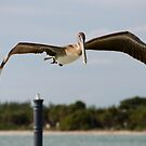 Low Flight by Donna Adamski