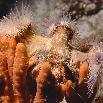 Hermit crab with anemones by eschlogl
