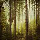 The Small And The Tall - Fir Forest by Dirk Wuestenhagen