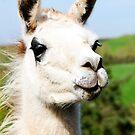 Llama by Leon Woods