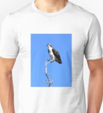 Osprey in Medicine Bow Ranges, Wyoming T-Shirt