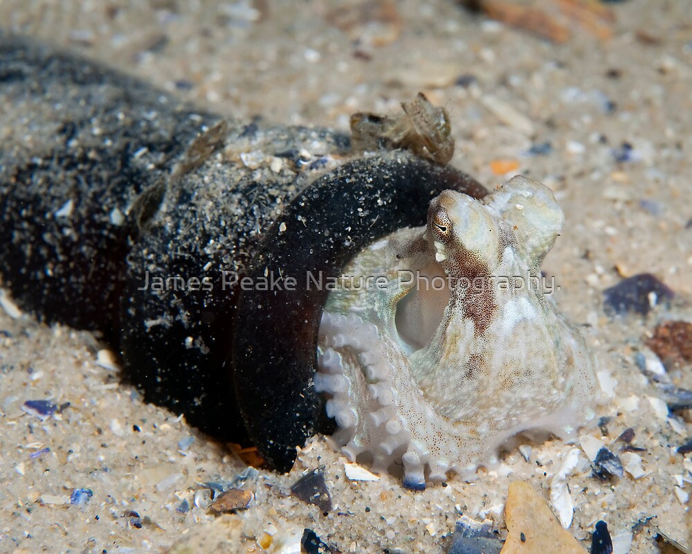 Mollusc In A Bottle. by James Peake Nature Photography.