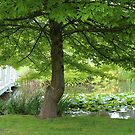 Altona Garden Retreat, South Spreyton by gaylene