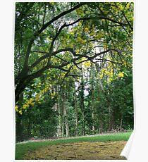 Botanic gardens, Cairns, Australia Poster