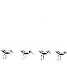 Avocets in a row by derbyshireduck