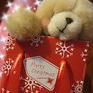 A Beary Christmas by Kaye Paloma