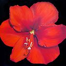 Red Hibiscus - Tropical Dream by portraitbyflora