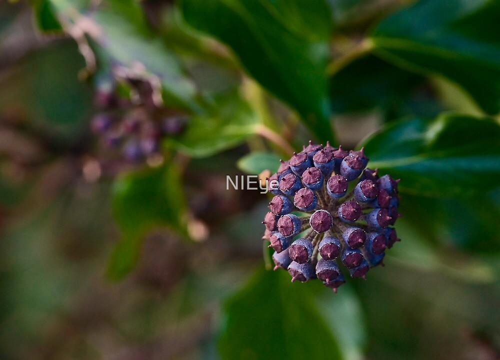 Ivy in winter by NIEye