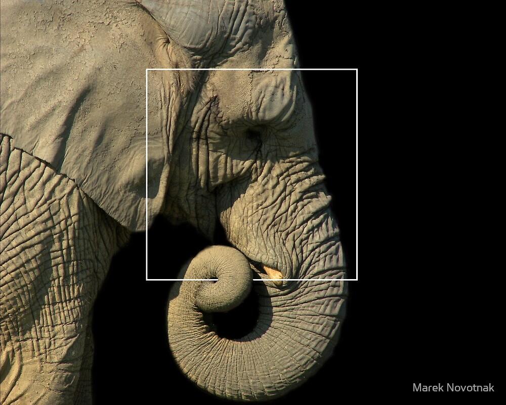 Elephas maximus indicus by Marek Novotnak