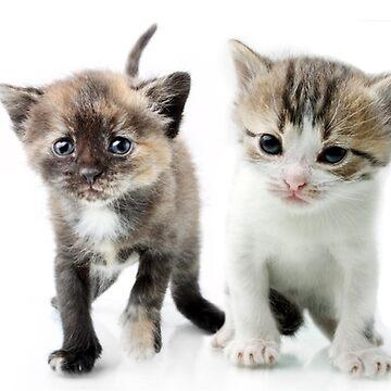 kitten by BorodinDenis