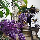 Flowers Near The Clocktower by tomeoftrovius