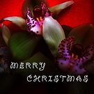 Merry Christmas!!!! by Vitta
