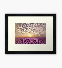 Sunset over a summer lavender field in Provence, France Framed Print