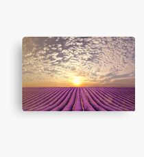 Sunset over a summer lavender field in Provence, France Canvas Print