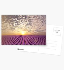 Sunset over a summer lavender field in Provence, France Postcards