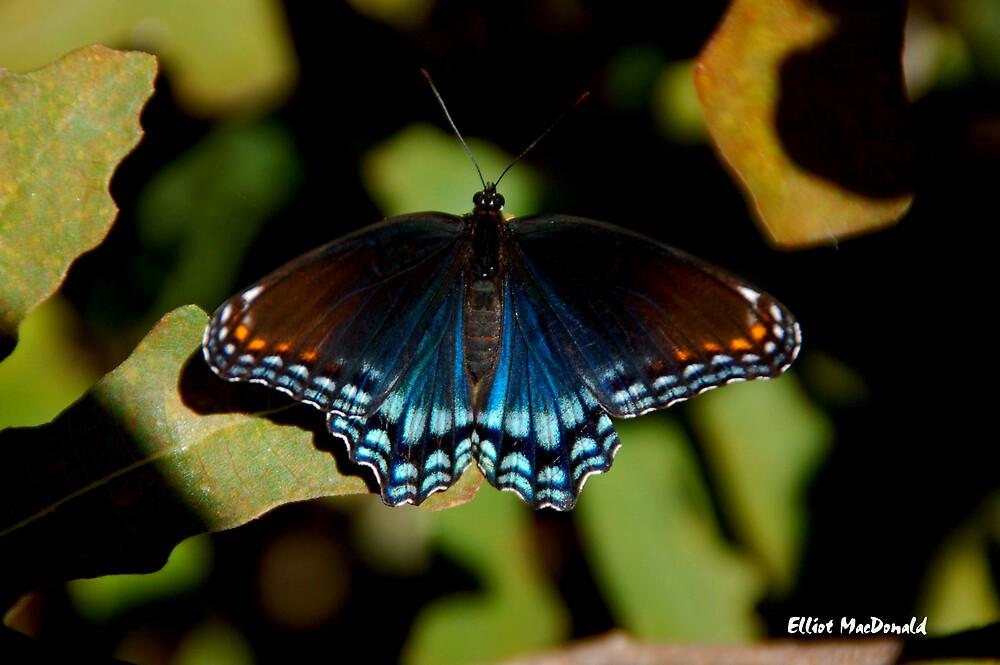 Pretty Moth by Elliot MacDonald