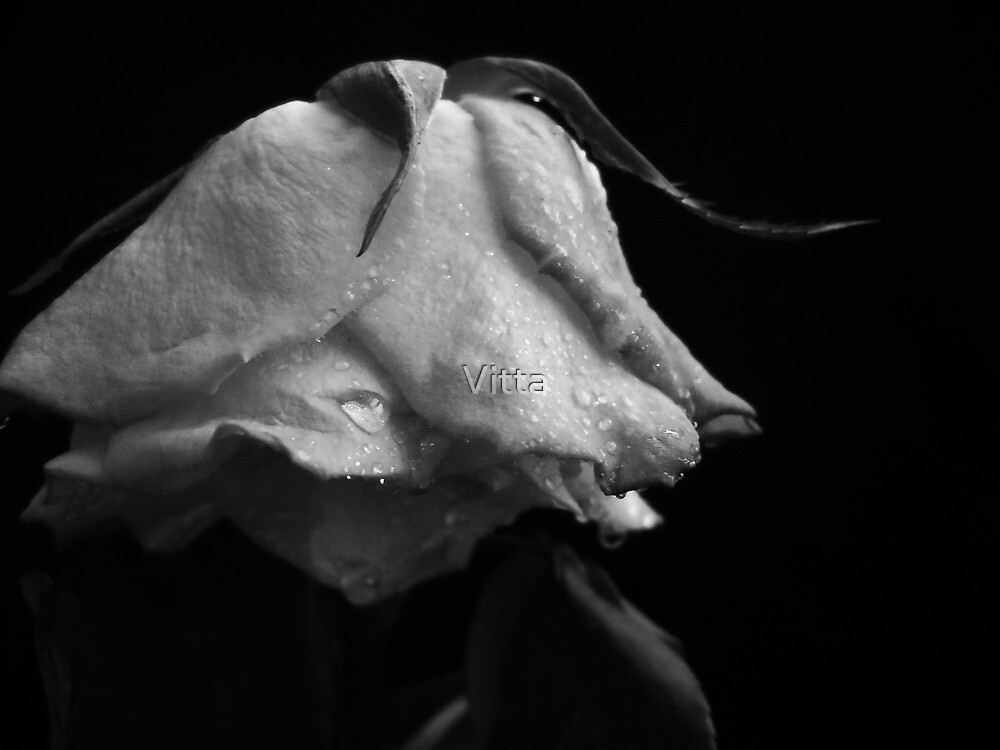 Silver Rose and frost.Collection. by Vitta