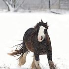 Clydesdale horse in winter by Jim Cumming