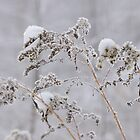Frozen Reed covered with Snow by denis-romanov
