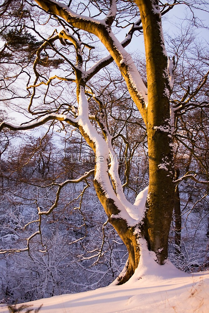 Branching Out by Lynne Morris