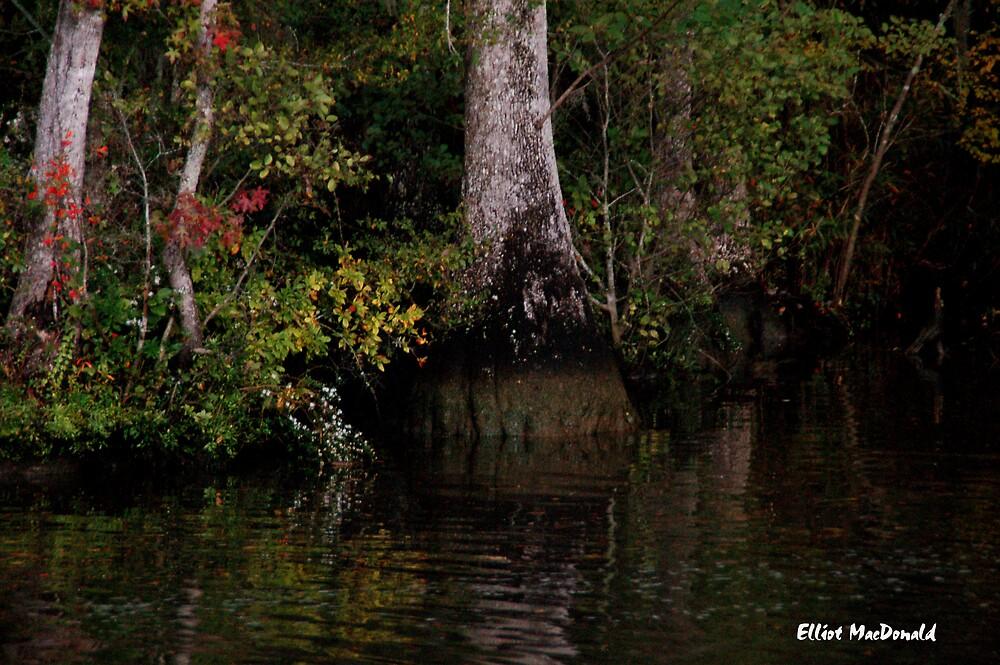 Waccamaw Cypress Swamp, South Carolina by Elliot MacDonald
